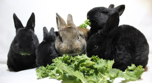 BUNNIES FEATURED IMAGE