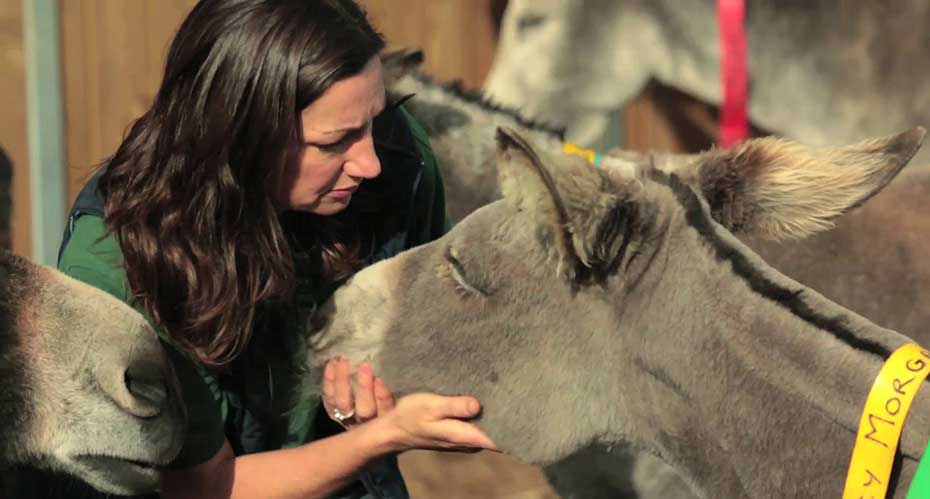 A vet looking after a donkey