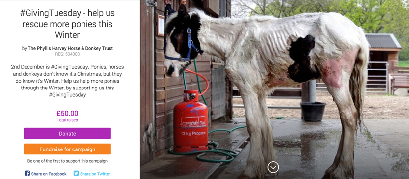 Screen Shot of The Phyllis Harvey Horse & Donkey Trust's Giving Tuesday campaign page
