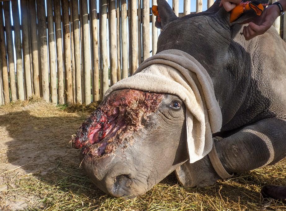 Hope the Rhino