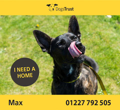 Dogs Trust add text to their images to give them more context