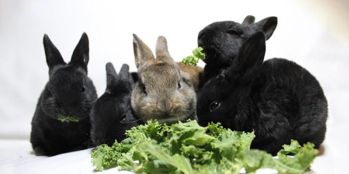 photo of nine bunny rabbits