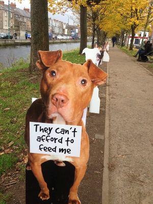 Dog's Trust Ireland's #canaldogs
