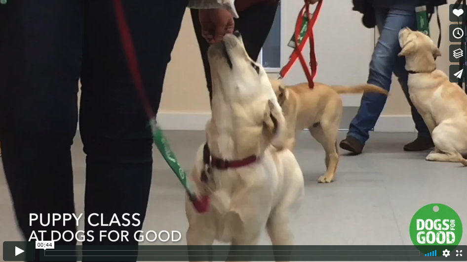 puppy-class-at-Dogfs-For-Good