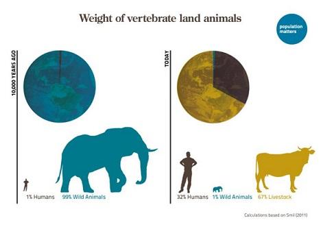 weight-of-vertebrate